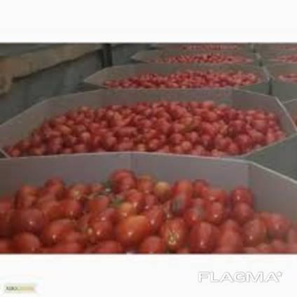 Купить октабин - тару под арбуз (бахчу)
