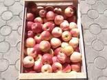 Ящик для яблок - фото 3