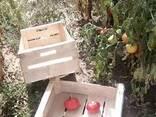 Ящик под помидор - фото 1