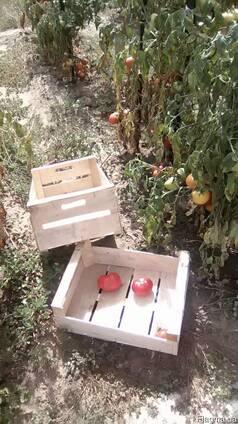 Ящик под помидор