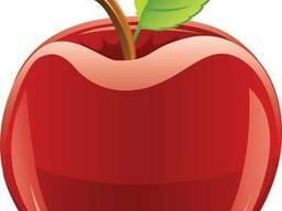 Ящики и лотки для яблок