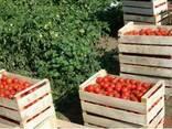 Ящики в Крыму для персика,помидоров,яблок,сливы,винограда. - фото 2