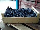 Ящики в Крыму для персика,помидоров,яблок,сливы,винограда. - фото 4