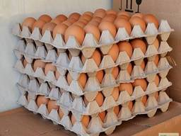 Яйца. Экспорт Азия Ближний восток