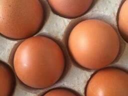 Яйца куриные. Категория С1 С2 Экспорт