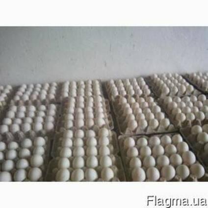 Яйце інкубаційне качине, гусине ОПТОМ від 500шт
