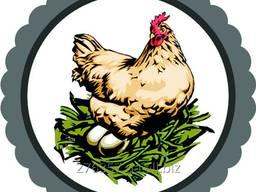 Яйце куряче Солотвинська птахофабрика