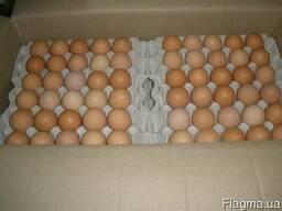 Яйцо куриное С-1