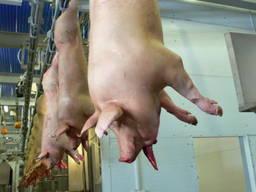 Забій свиней