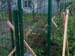 Забор из сетки высота-1.53 метра купить по минимальной цене - фото 8