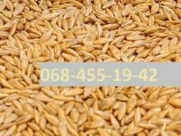 Куплю кукурузу Тернополь