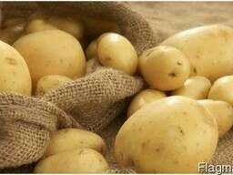 Закупаем картофель нестандартный у себя на рампе