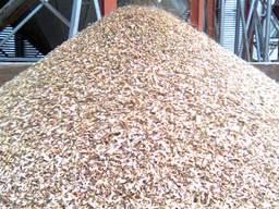 Закупаем отходы масличных и зерновых культур