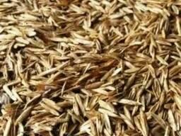 Куплю семена райграса