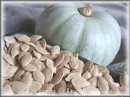 Закупаем семена тыквы, грецкий орех, фасоль