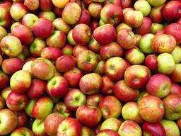Закупаем яблоки для переработки!