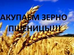 Закупаем зерно Пшеницы