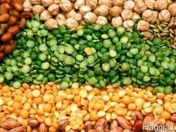 Закупаем зерновые, бобовые культуры