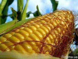 Закупаем зерновые и маслсчные