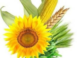 Закупаем зерновые и масличные культуры оптом по всей Украине