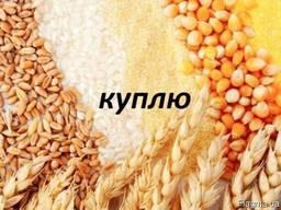 Закупаем зерновые отходы