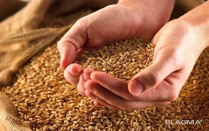 Закупает ячмень, соя, пшеница, кукуруза, семечка подсолнечни