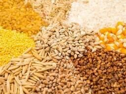 Закупка сельхозпродукции