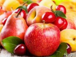 Закупка яблок и груши по контракту