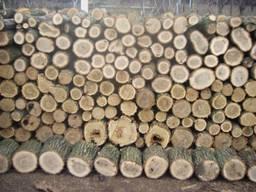 Закупляємо дрова твердих та м'яких порід