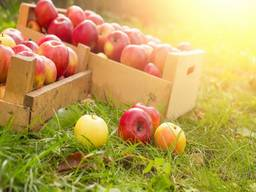 Закупляємо яблука по Полтавській області
