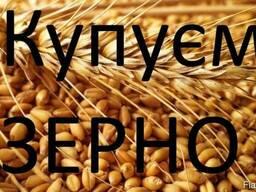 Закуповуємо пшеницю 2 кл, 3 кл, та фураж відповідно до Держс