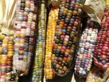 Закуповуємо відходи кукурудзи - фото 2
