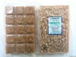 Замороженный корм для рыб Гаммарус.