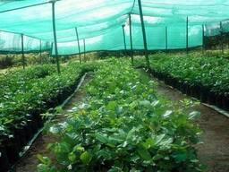 Сетка для сельского хозяйства , затенение 60%, 4,0х50,0