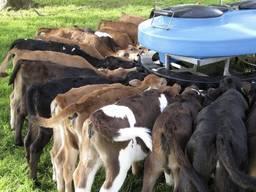ЗЦМ для телят, сухое молоко, сыворотка корм