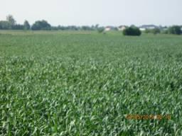 Земельну ділянку СГ