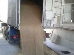 Зерновозы,транспортировка зерна на самосвалах Украины