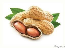 Жареный арахис всех видов
