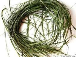 Зубровка душистая (трава)