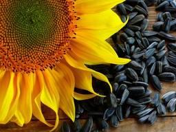 Посевной материал Подсолнечника и кукурузы