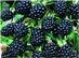 Freshberry, ООО